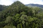 Rainforest in Borneo -- sabah_aerial_0295