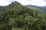 Rainforest in Borneo -- sabah_aerial_0296