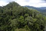 Rainforest in Borneo -- sabah_aerial_0297