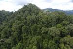 Rainforest in Borneo -- sabah_aerial_0298