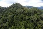 Rainforest in Borneo -- sabah_aerial_0299