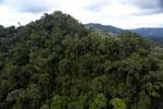 Rainforest in Borneo -- sabah_aerial_0300