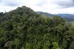Rainforest in Borneo -- sabah_aerial_0302