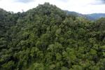 Rainforest in Borneo -- sabah_aerial_0303