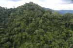 Rainforest in Borneo -- sabah_aerial_0304