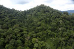 Rainforest in Borneo -- sabah_aerial_0305