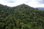 Rainforest in Borneo -- sabah_aerial_0307