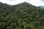Rainforest in Borneo -- sabah_aerial_0308