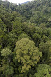 Rainforest in Borneo -- sabah_aerial_0310