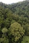 Rainforest in Borneo -- sabah_aerial_0311