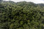 Rainforest in Borneo -- sabah_aerial_0313