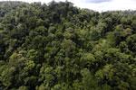 Rainforest in Borneo -- sabah_aerial_0317