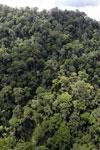 Rainforest in Borneo -- sabah_aerial_0319