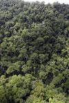 Rainforest in Borneo -- sabah_aerial_0320
