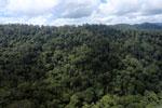 Rainforest in Borneo -- sabah_aerial_0321