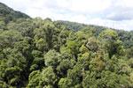 Rainforest in Borneo -- sabah_aerial_0322
