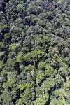 Rainforest in Borneo -- sabah_aerial_0324