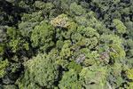 Rainforest in Borneo -- sabah_aerial_0325