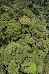 Rainforest in Borneo -- sabah_aerial_0326