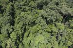 Rainforest in Borneo -- sabah_aerial_0328