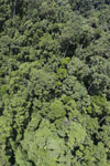 Rainforest in Borneo -- sabah_aerial_0329