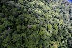 Rainforest in Borneo -- sabah_aerial_0331
