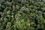 Rainforest in Borneo -- sabah_aerial_0333