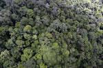 Rainforest in Borneo -- sabah_aerial_0335