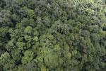Rainforest in Borneo -- sabah_aerial_0336
