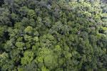 Rainforest in Borneo -- sabah_aerial_0337