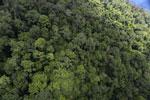 Rainforest in Borneo -- sabah_aerial_0338