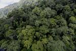Rainforest in Borneo -- sabah_aerial_0339