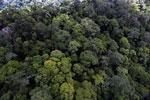 Rainforest in Borneo -- sabah_aerial_0341