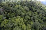 Rainforest in Borneo -- sabah_aerial_0343
