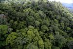 Rainforest in Borneo -- sabah_aerial_0344