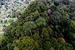 Rainforest in Borneo -- sabah_aerial_0345
