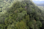 Rainforest in Borneo -- sabah_aerial_0346