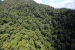Rainforest in Borneo -- sabah_aerial_0350