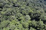 Rainforest in Borneo -- sabah_aerial_0354