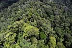 Rainforest in Borneo -- sabah_aerial_0355