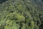 Rainforest in Borneo -- sabah_aerial_0357