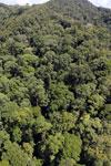 Rainforest in Borneo -- sabah_aerial_0358