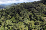 Rainforest in Borneo -- sabah_aerial_0359