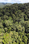 Rainforest in Borneo -- sabah_aerial_0362