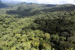 Rainforest in Borneo -- sabah_aerial_0364