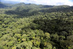 Rainforest in Borneo -- sabah_aerial_0365