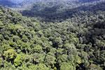 Rainforest in Borneo -- sabah_aerial_0368