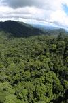 Rainforest in Borneo -- sabah_aerial_0370