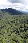 Rainforest in Borneo -- sabah_aerial_0371