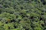 Rainforest in Borneo -- sabah_aerial_0373